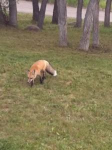 Foximage-e1366301746554